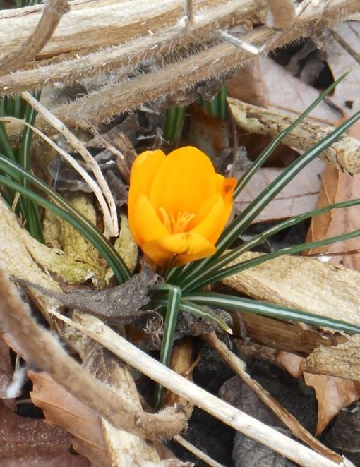 March 2 garden 020