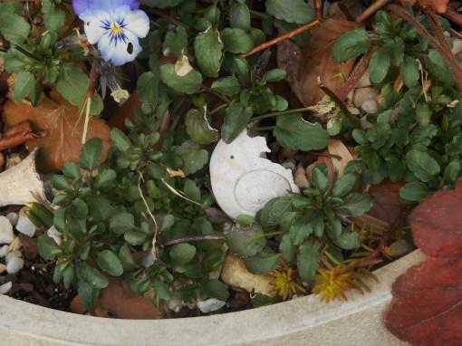 March 2 garden 026