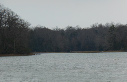 These waterways along the Colonial Parkway are protected by the Federal Government, and offer important habitat for migrating birds.