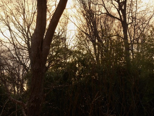 March 23 2014 sunset 007