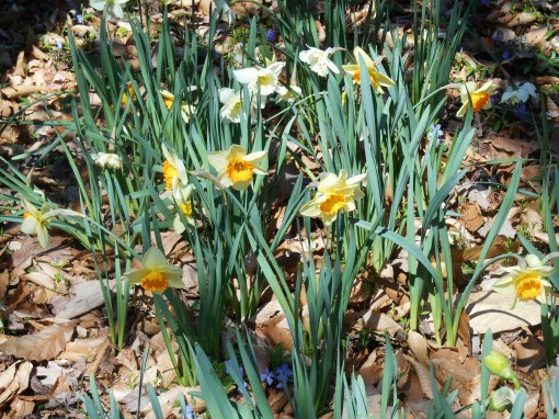 March 31 2014 flowers 023