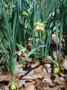 March 31 2014 flowers 024