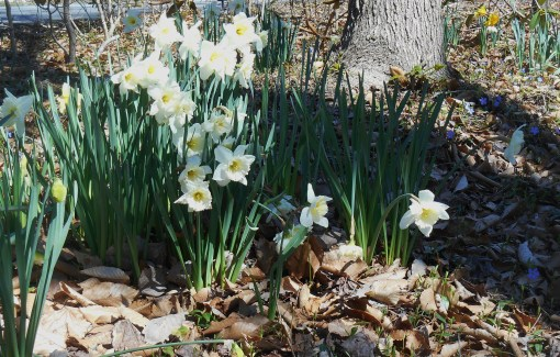 March 31 2014 flowers 025