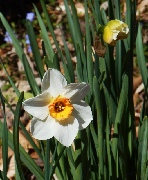 March 31 2014 flowers 027