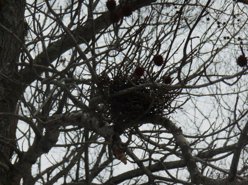 March 5 2014 parkway birds 076
