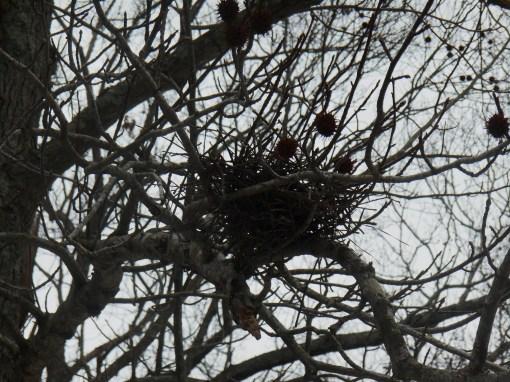 March 5 2014 parkway birds 076