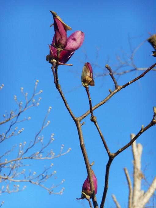 April 1 2014 garden 007