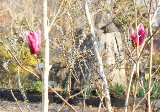 April 1 2014 garden 009