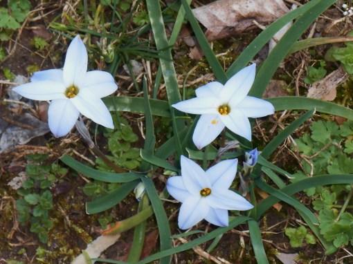 April 1 2014 garden 013