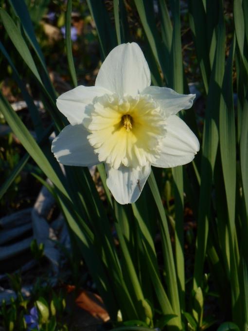 April 1 2014 garden 017