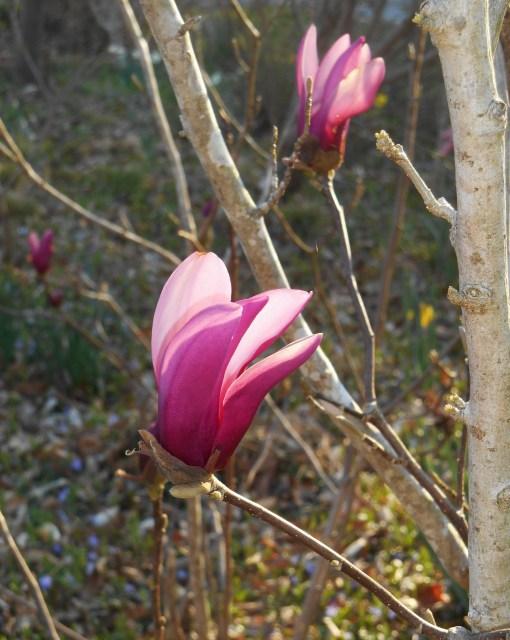 April 1 2014 garden 022