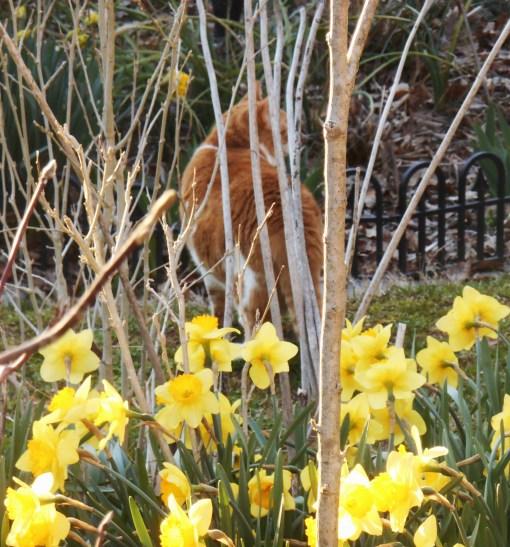 April 1 2014 garden 028
