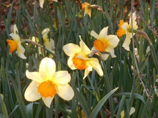 April 1 2014 garden 046