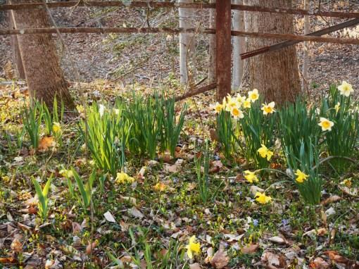 April 1 2014 garden 050