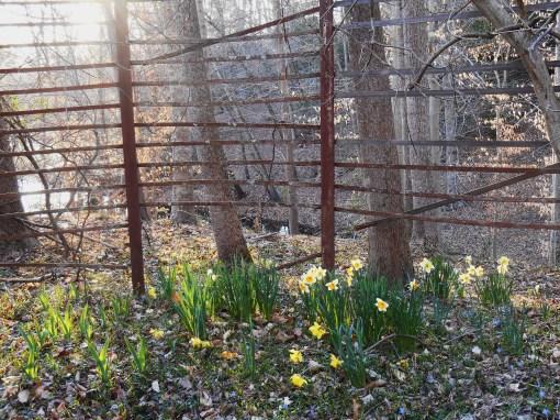 April 1 2014 garden 051