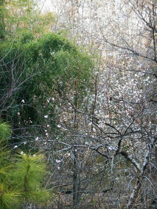 April 1 2014 garden 084