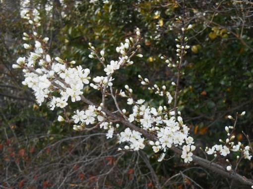 April 1 2014 garden 093