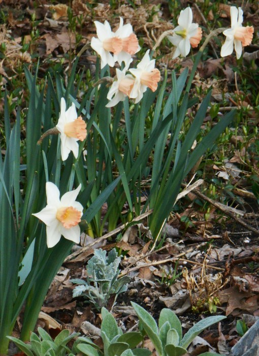 April 1 2014 garden 097
