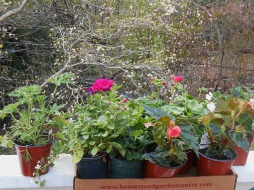 April 11, 2014 Homestead Plants 001