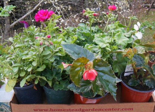 April 11, 2014 Homestead Plants 002