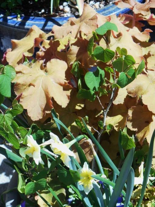April 16, 2014 flowers 002
