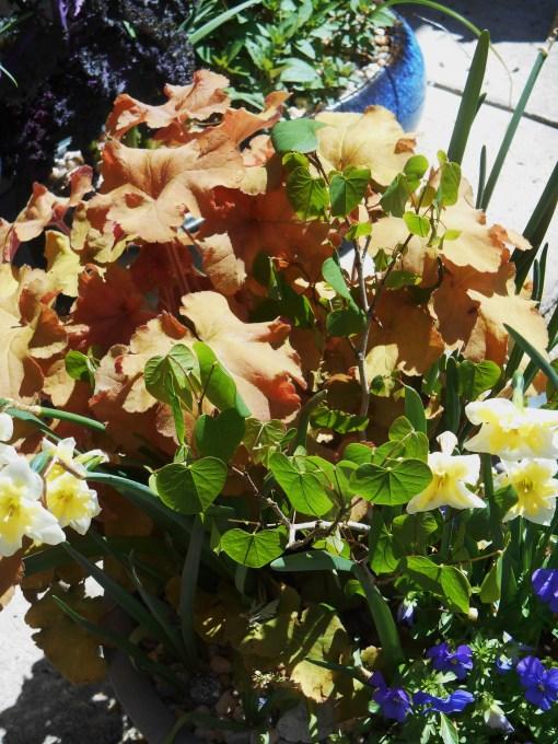 April 16, 2014 flowers 003