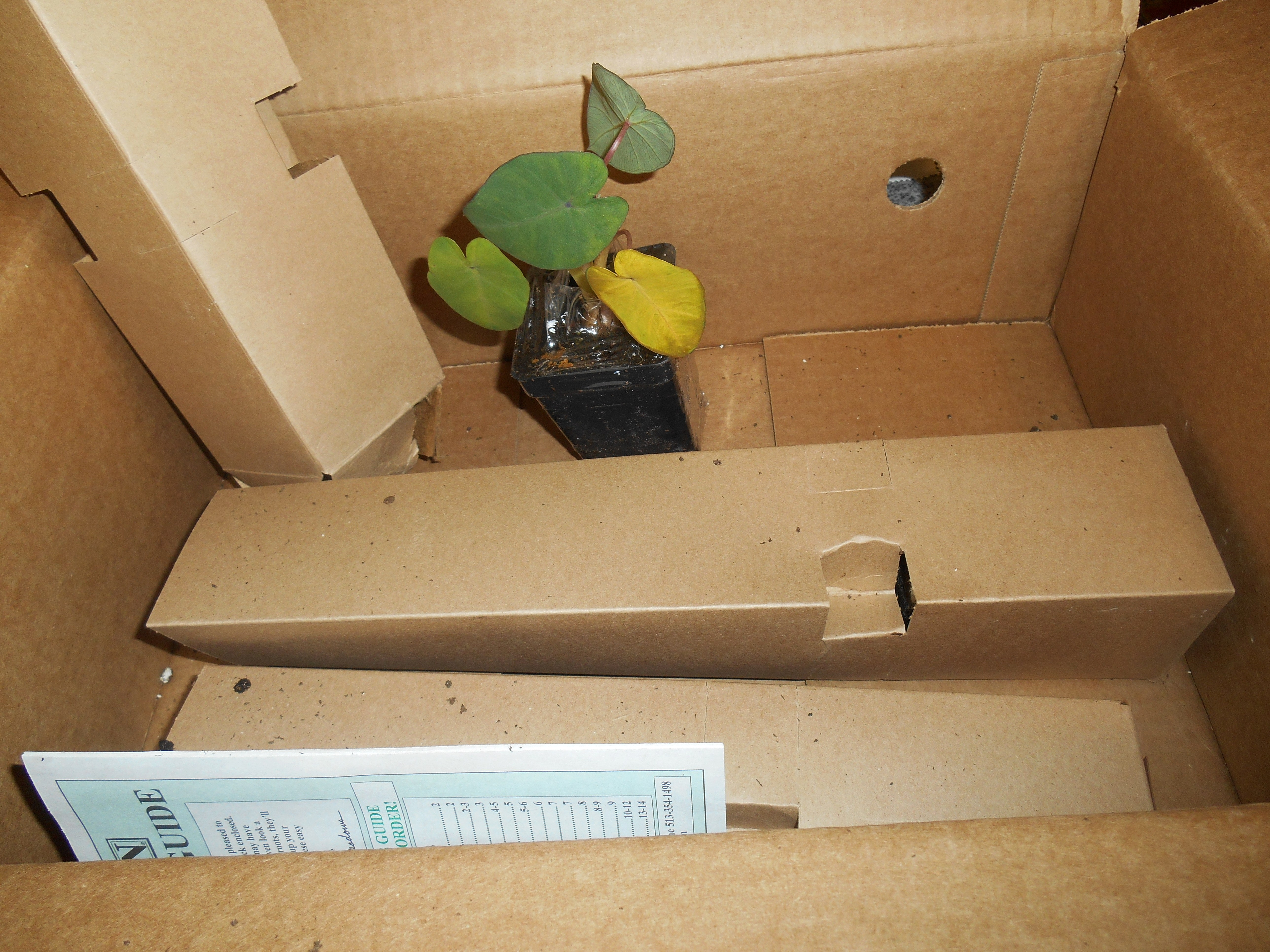 Package from Michigan Bulb Company received on Saturday, April 19, 2014 to replace the earlier shipment.