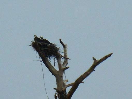 April 19, 2014 wisteria 005
