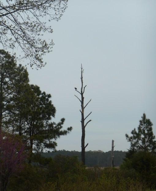 April 19, 2014 wisteria 049