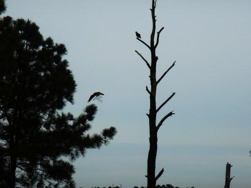 April 19, 2014 wisteria 055