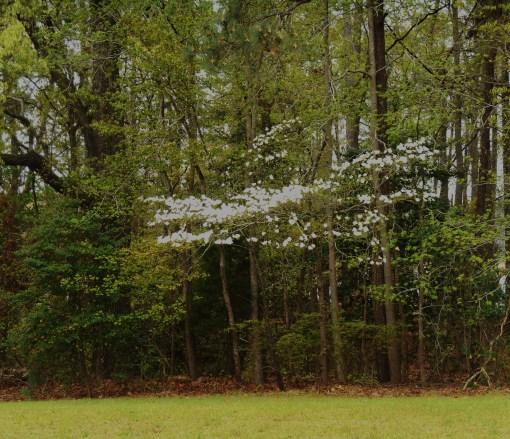April 19, 2014 wisteria 065