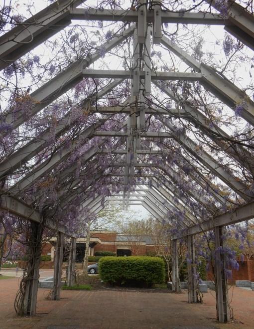 April 19, 2014 wisteria 107