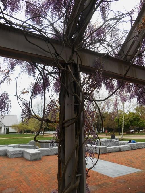 April 19, 2014 wisteria 109
