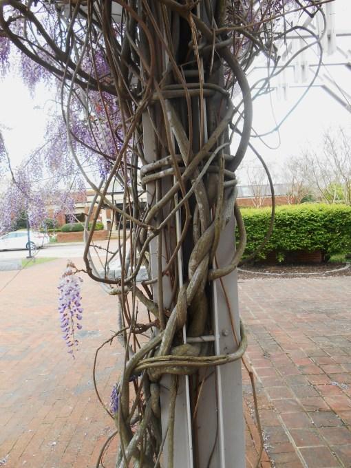 April 19, 2014 wisteria 111