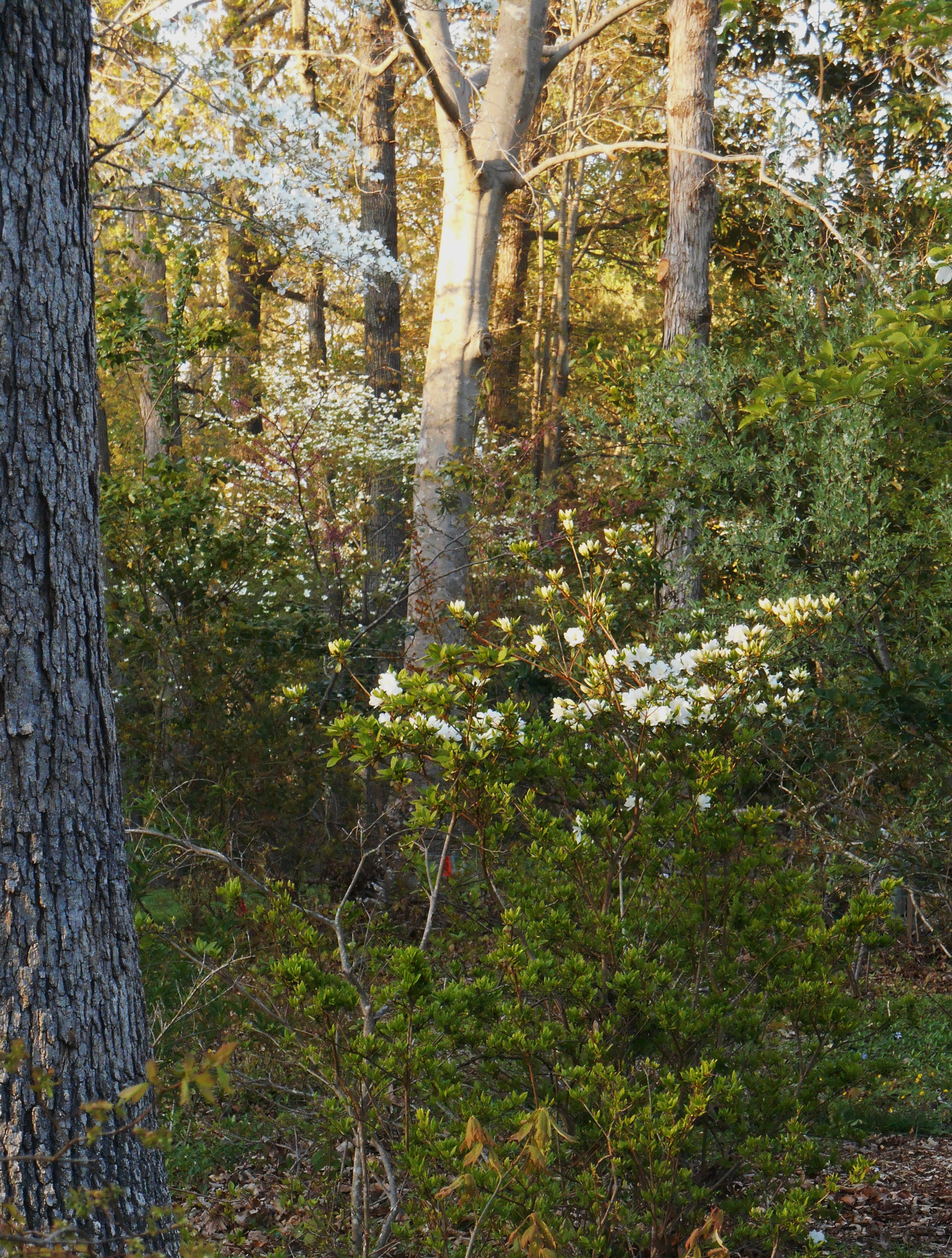 White | Forest Garden