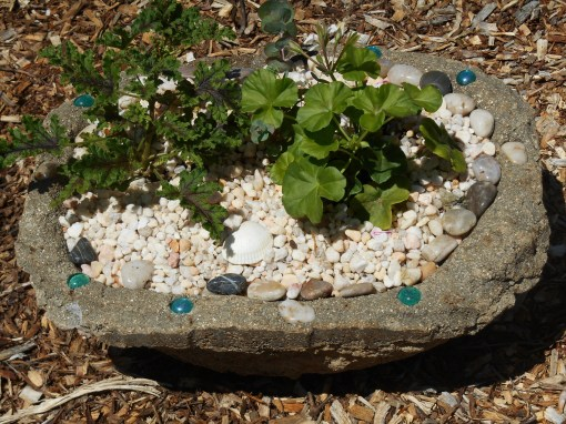 A container is still the easiest way to control the soil plants grow in.  This is my newest hypertufa trough, planted up with a Eucalyptus tree and geraniums.