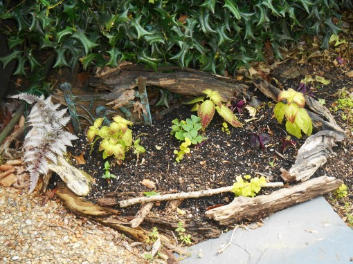A tiny raised bed near my friends' front porch with new starts for the season ahead.