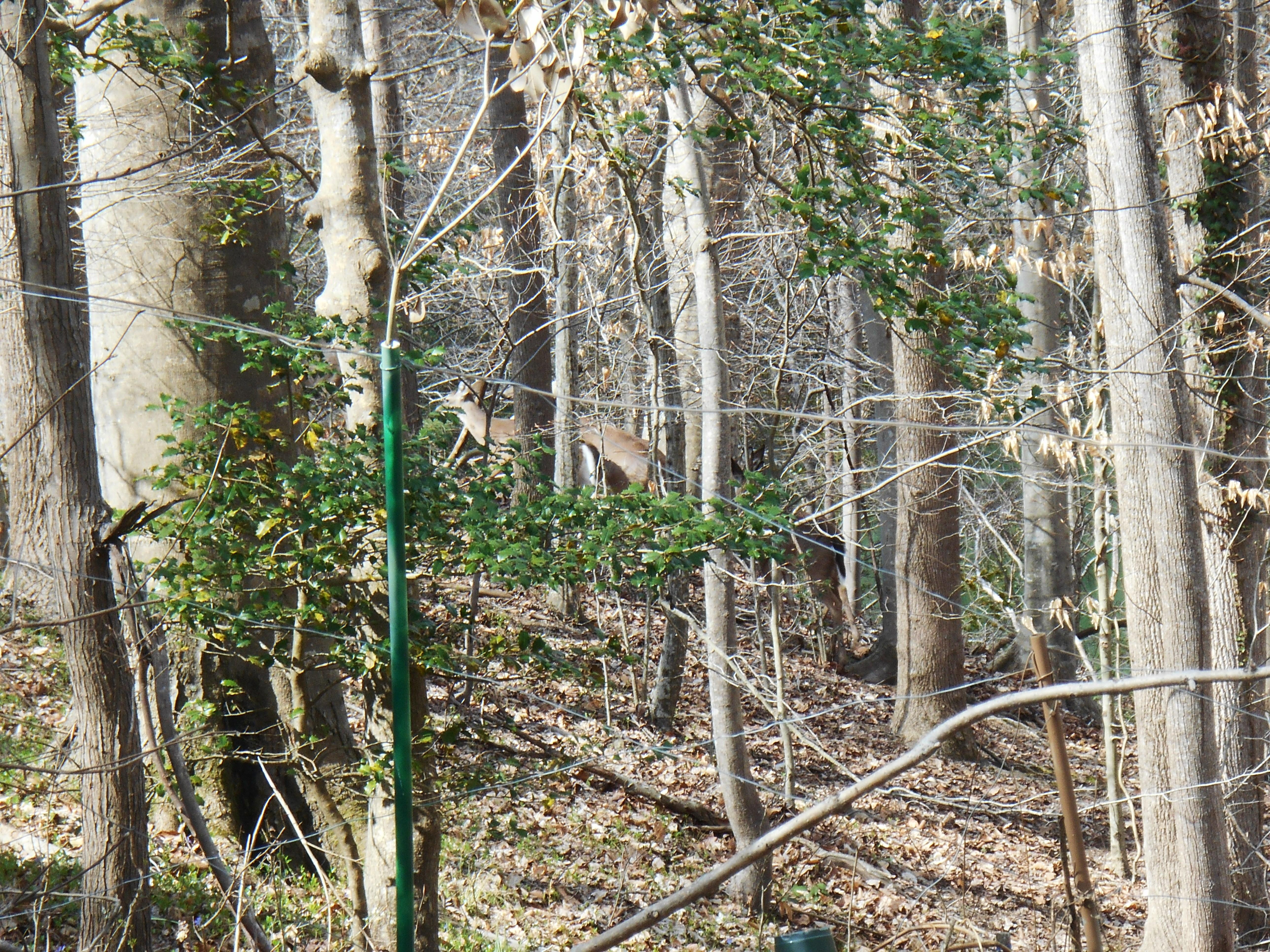 Backyard Forest Management : Deer management  Forest Garden  Page 4