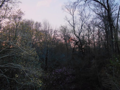 April 7 sunset 004