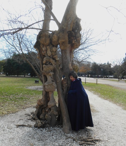 A friend posing with one of these beautiful old trees near the Colonial Capitol in CW last December.