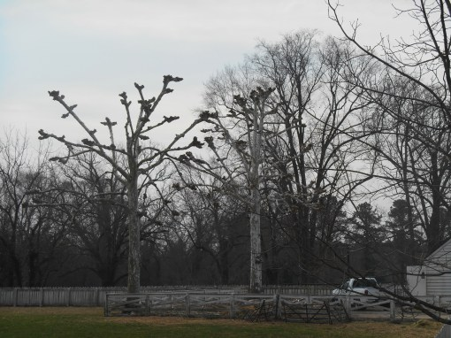 The same trees, photographed on March 12, 2014.