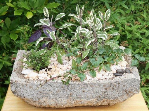 A tiny herb garden in a hypertufa pot