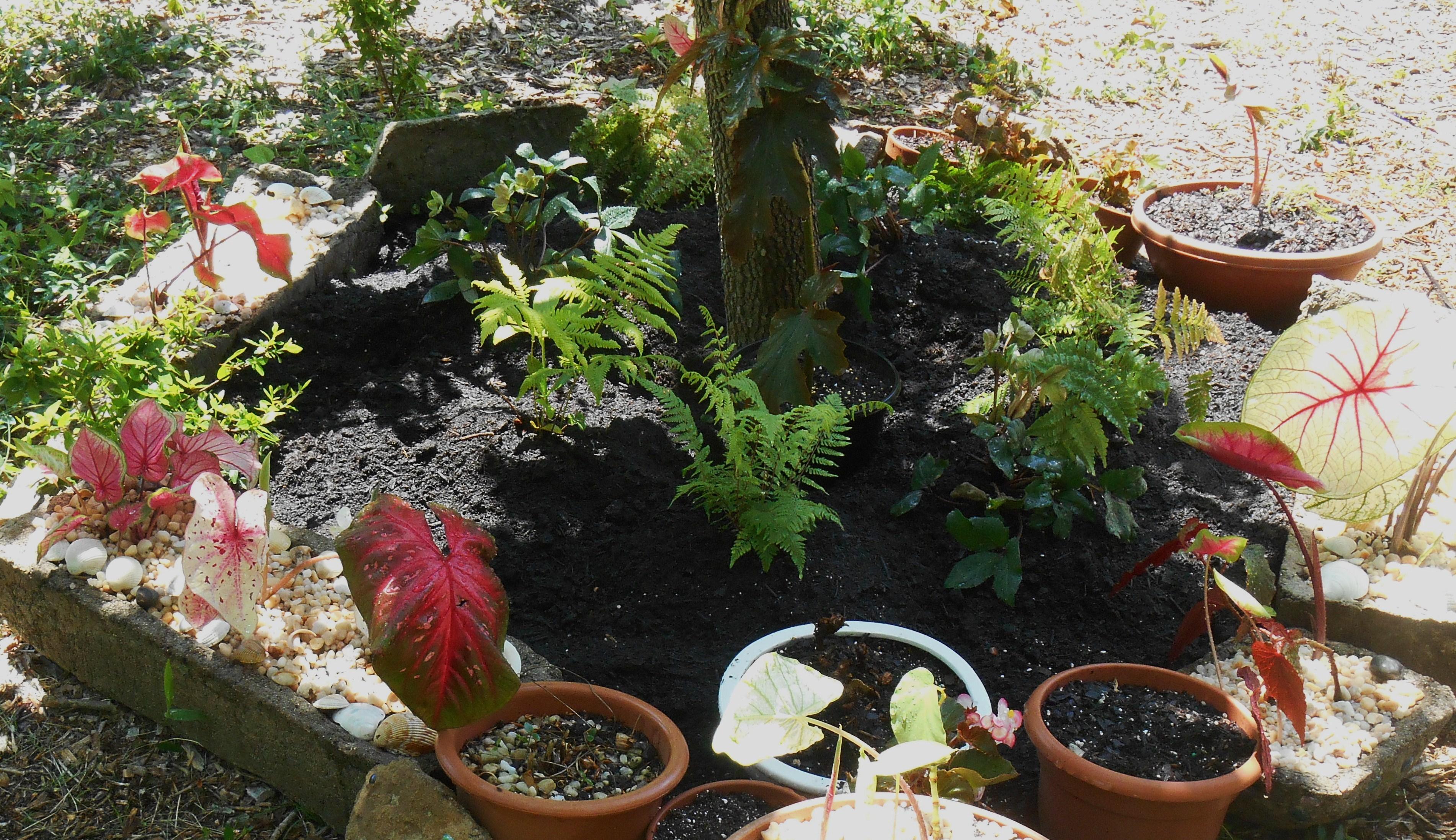 May 19, 2014 new raised bed fern garden 002
