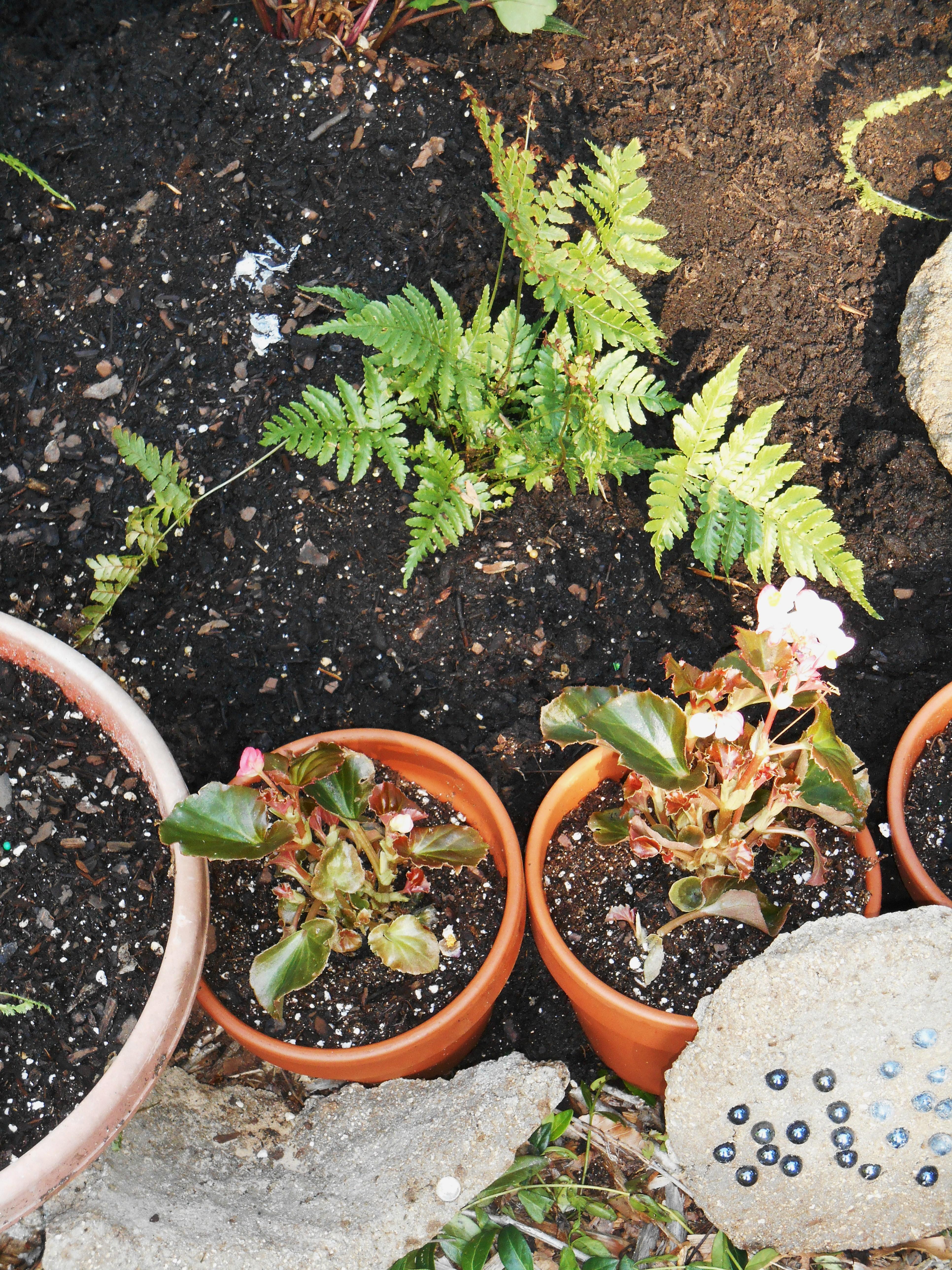 May 19, 2014 new raised bed fern garden 030