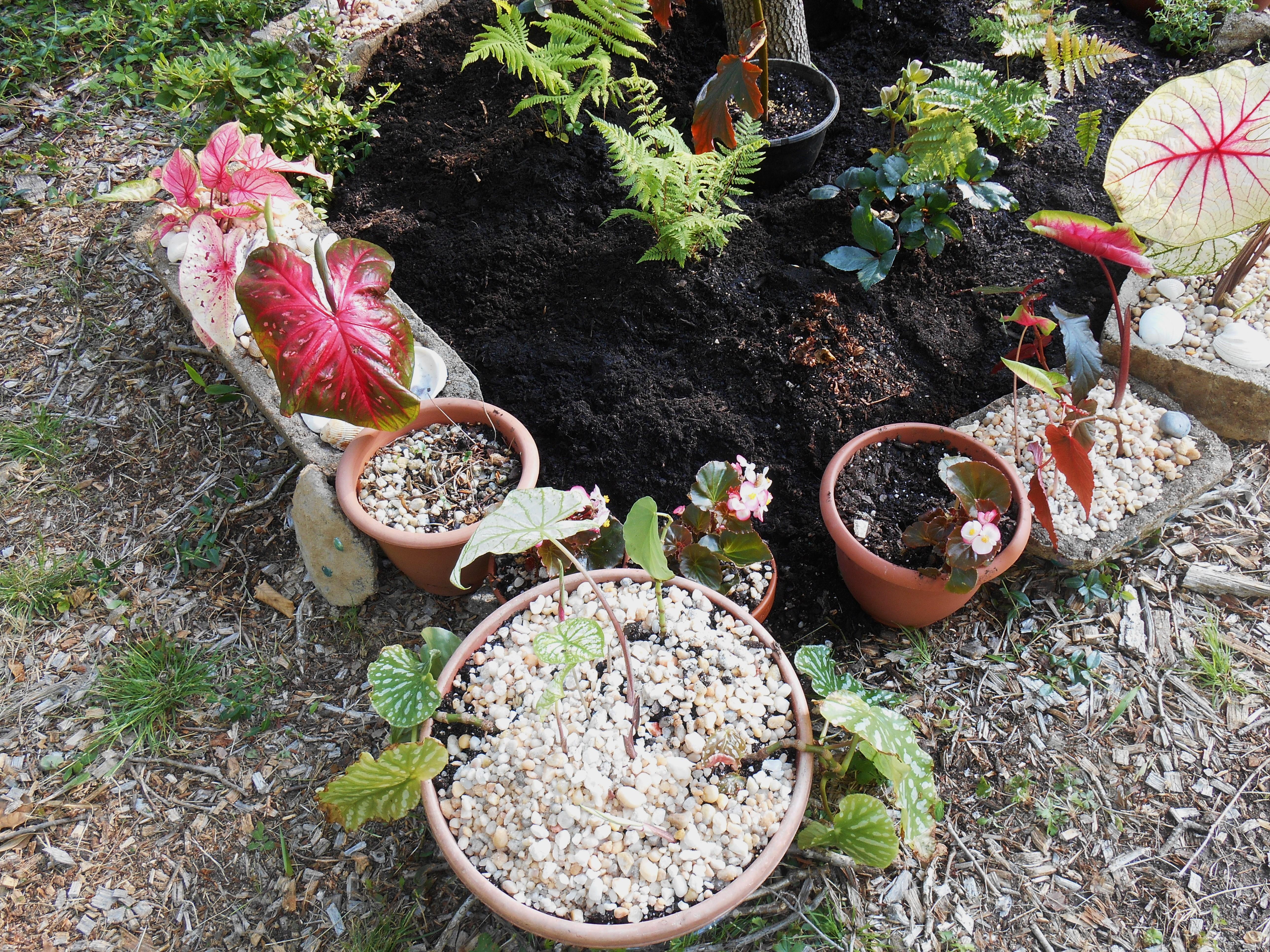 May 19, 2014 new raised bed fern garden 032