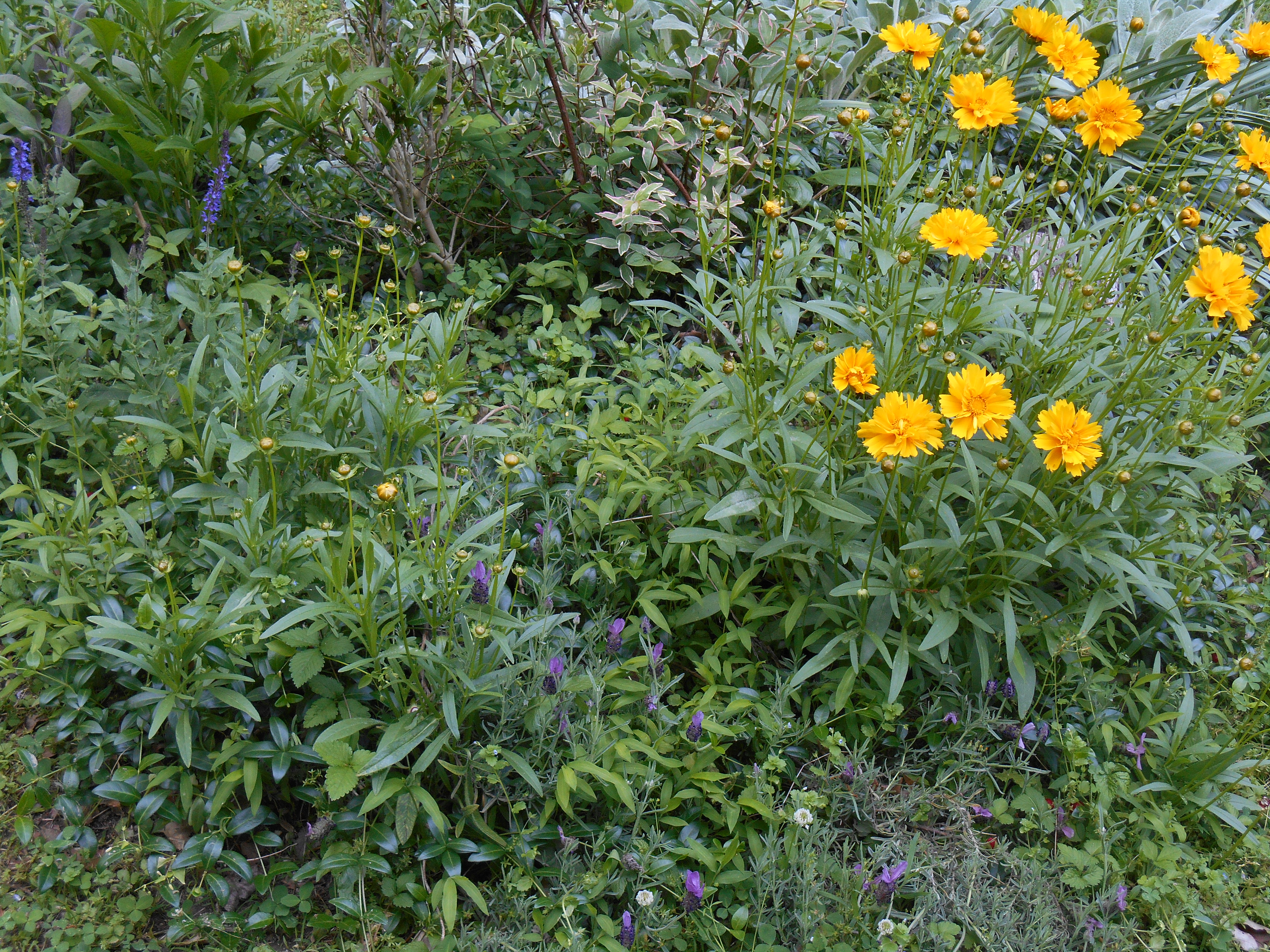 Newly planted in 2013, this perennial bed has grown into a vibrant community of plants.