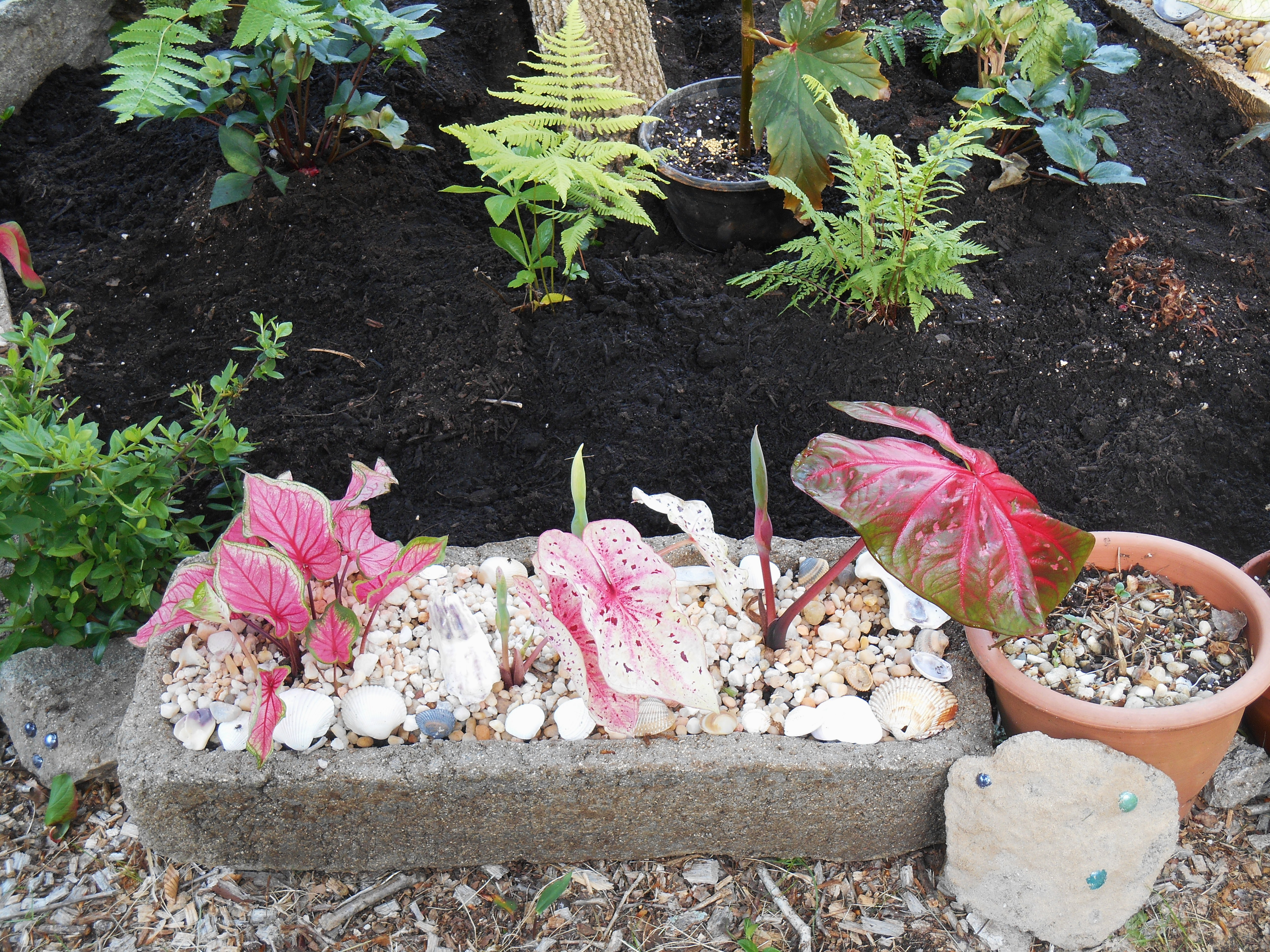 Caladiums fill the hypertufa troughs used to border this raised bed.