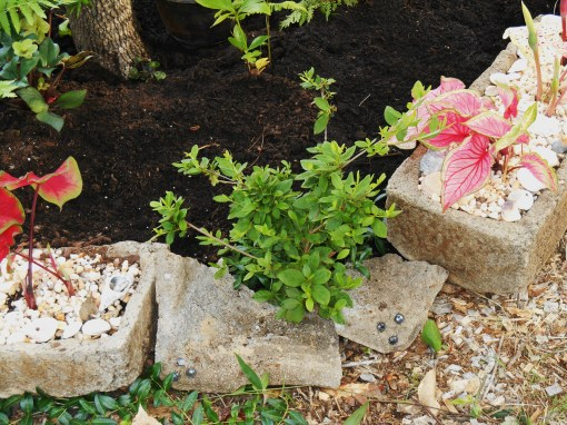 "A few badly grazed Azaleas fall along the peremiter of this new raised bed.  Broken pot pieces help form a low ""wall"" to hold soil behind them."