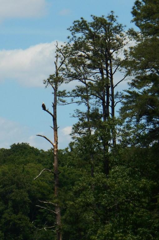 May 23, 2014 Mountain Laurel 057