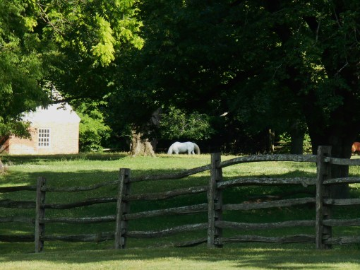 Colonial Williamsburg allows horses to graze in fields near the historic area.
